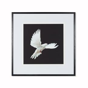 Dove-C-_Sonder-Living_Treniq_0