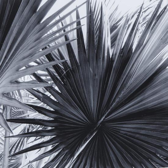 Black   white palm leaves b  sonder living treniq 1 1527739702714