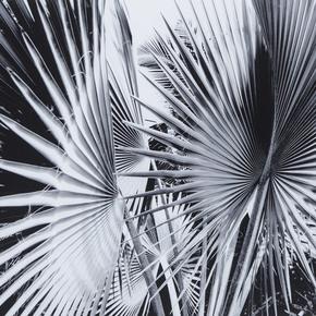 Black-&-White-Palm-Leaves-C-_Sonder-Living_Treniq_0