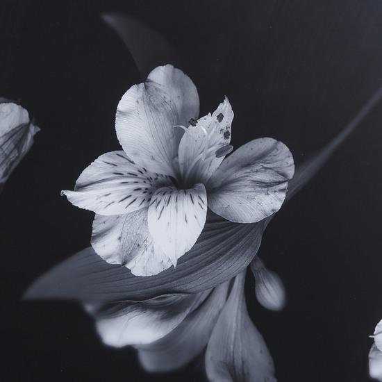 Black   white flowers glass float  sonder living treniq 1 1527739830923