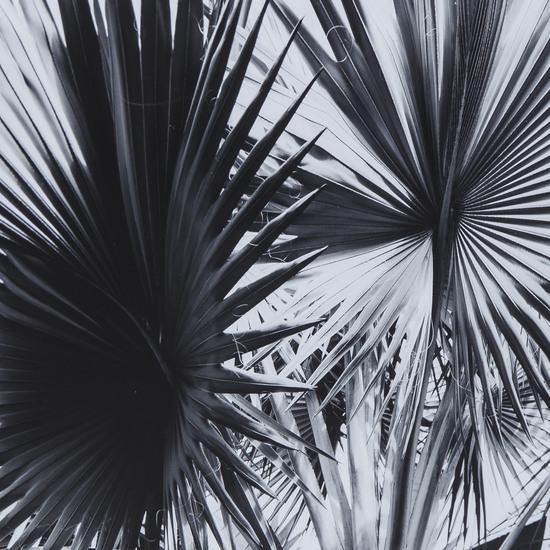 Black   white palm leaves a  sonder living treniq 1 1527739864044