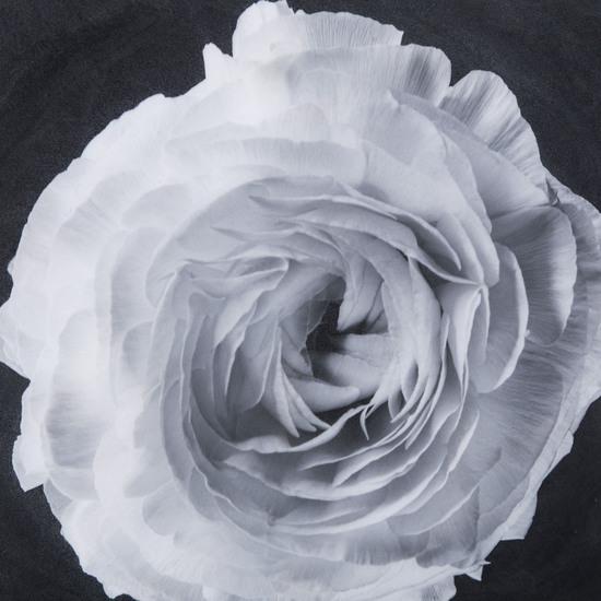 Black   white flower epoxy b  sonder living treniq 1 1527739897868