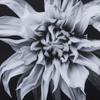 Black   white flower epoxy f  sonder living treniq 1 1527739936547