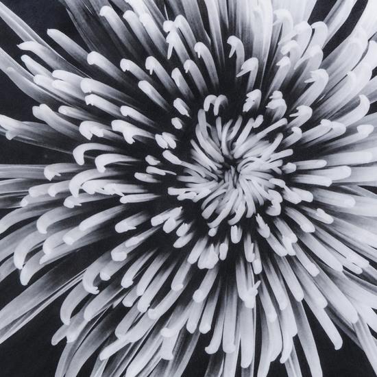 Black   white flower epoxy a  sonder living treniq 1 1527740109427
