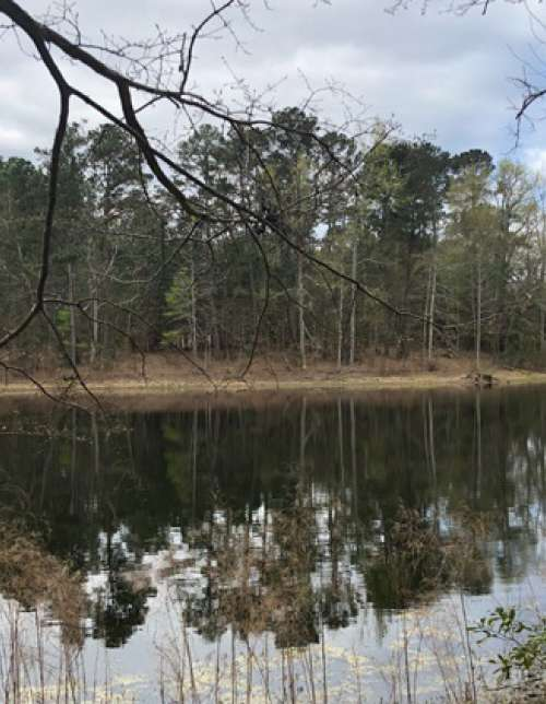 3771 McCords Ferry Rd - Recreational Land Tract