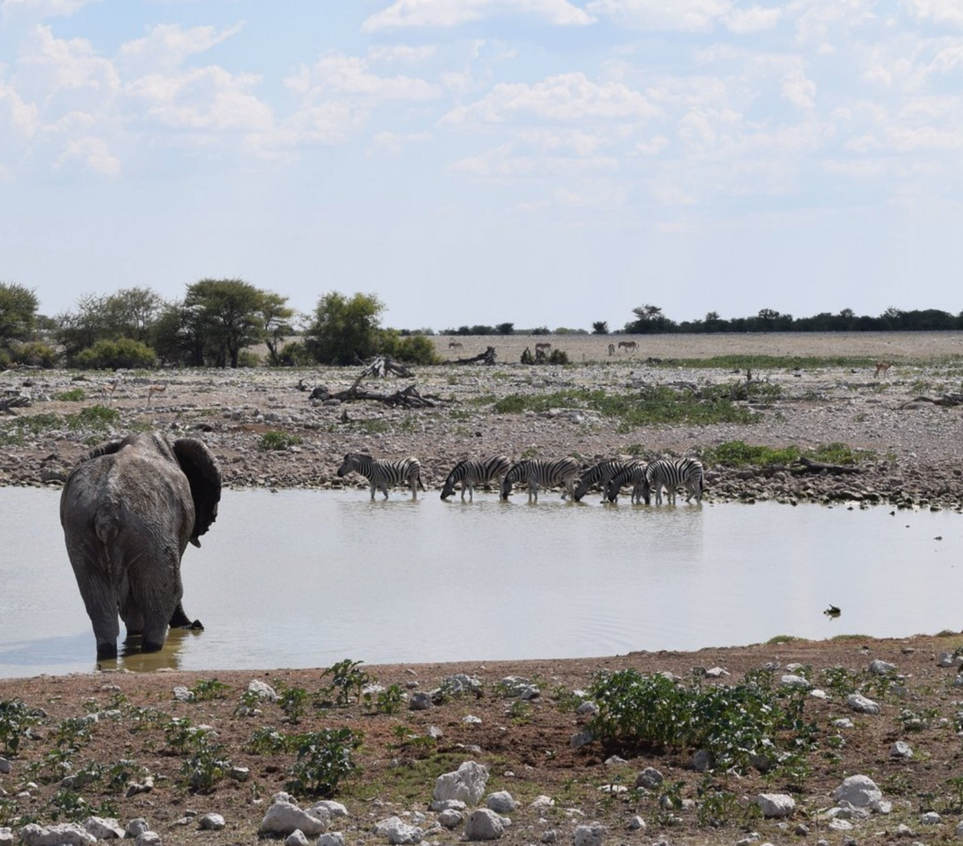 User submitted photo of Etosha National Park