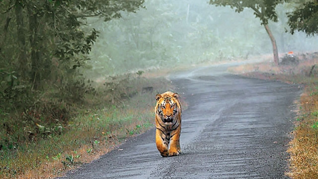 User submitted photo of Ranthambore National Park