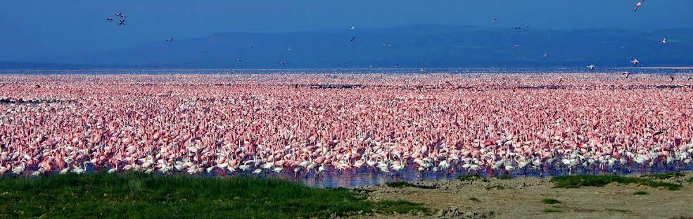 User submitted photo of Nakuru