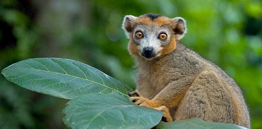 User submitted photo of Madagascar