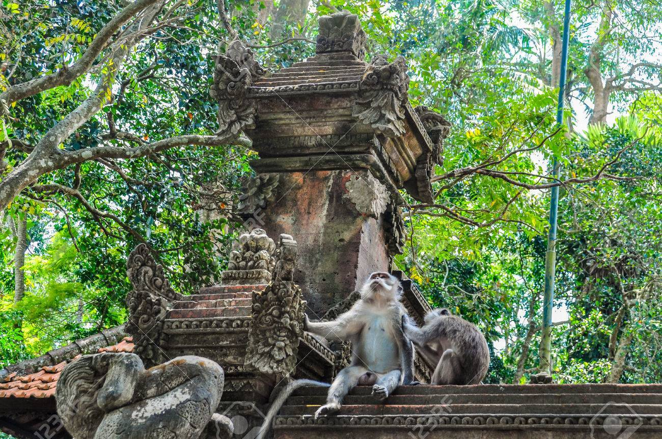 User submitted photo of Ubud Monkey Forest