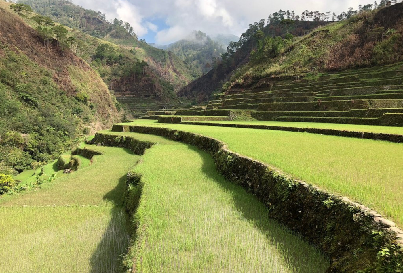 User submitted photo of Banaue Rice Terraces