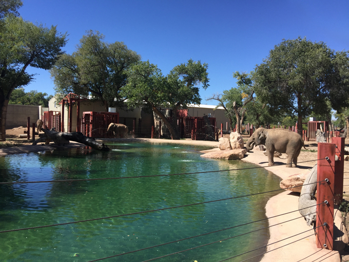 An Amazing Experience at the Zoo