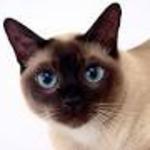 Iwo Kot