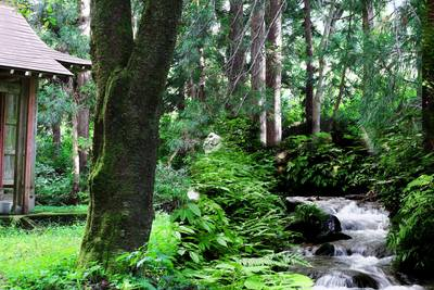 Okutadami Recreation Toshi Koen (Urasachiiki) Yaironomori Park