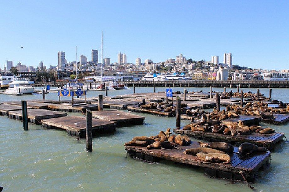 Trip photo #80/109 PIER 39 San Francisco