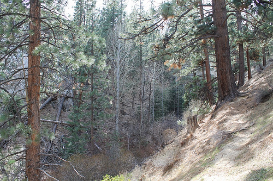 Trip photo #32/64 Davis Creek Regional Park