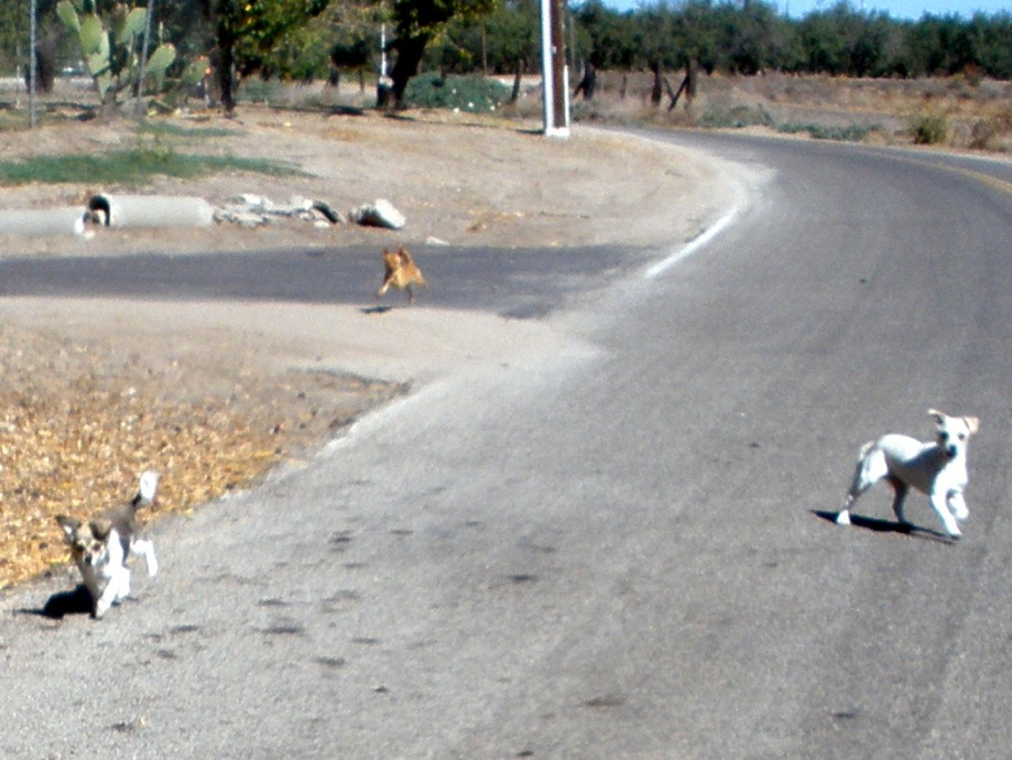 Trip photo #12/27 A few of the neighbor's pets came out to greet us as we start the second loop