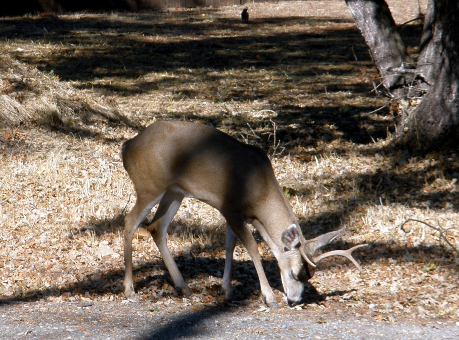 Trip photo #1/10 Young buck in Alamo