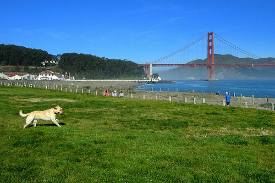 Trip photo #3/24 Crissy Field Dog Free Zone?