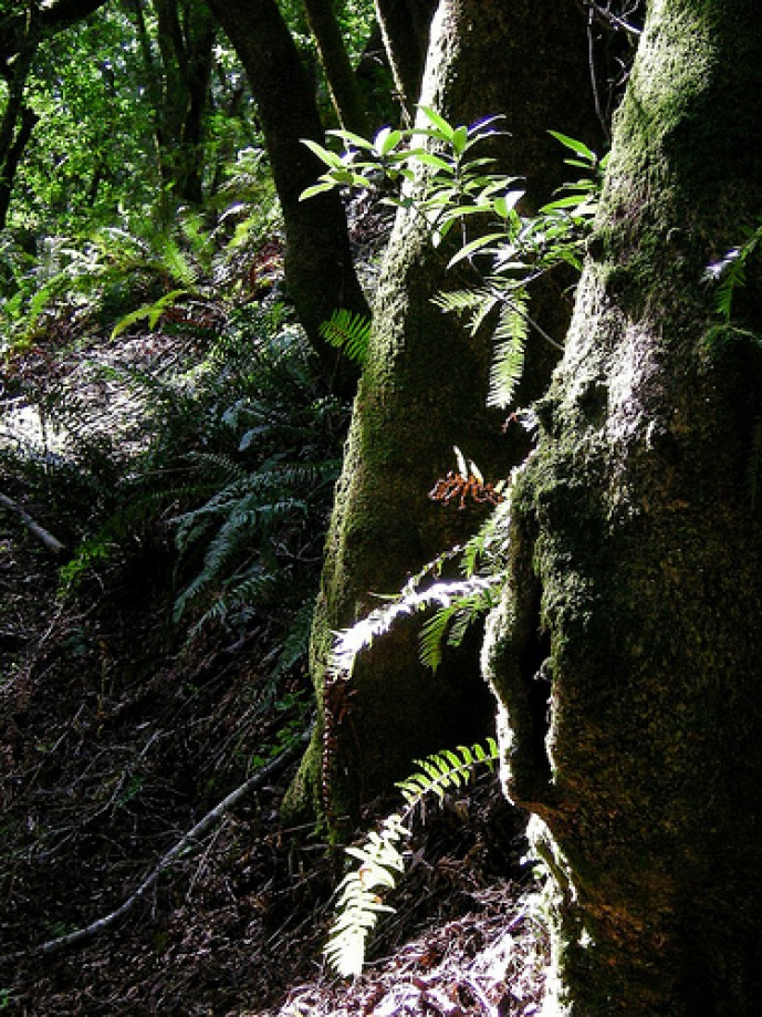 Trip photo #77/81 Ferns, Moss and Trees