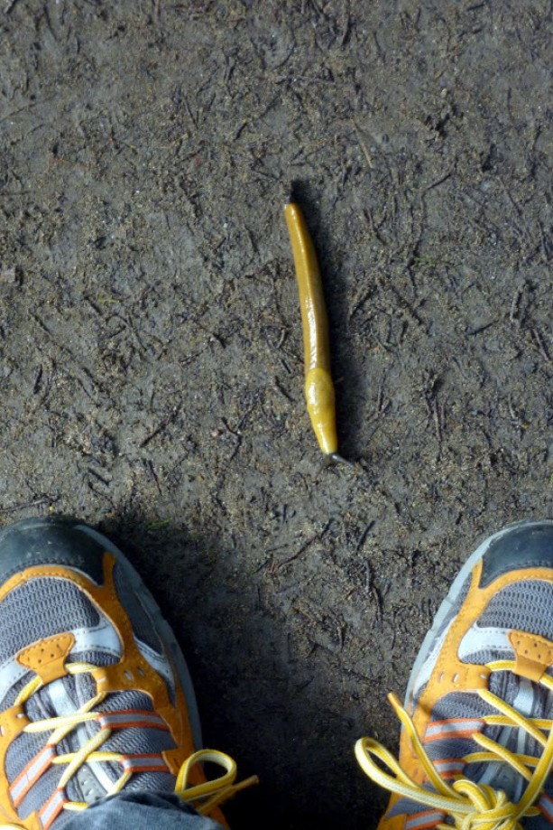 Trip photo #6/11 Banana Slug