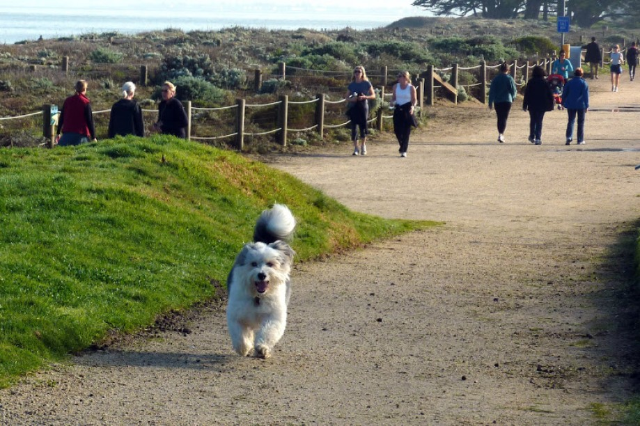 Trip photo #7/41 Olie running