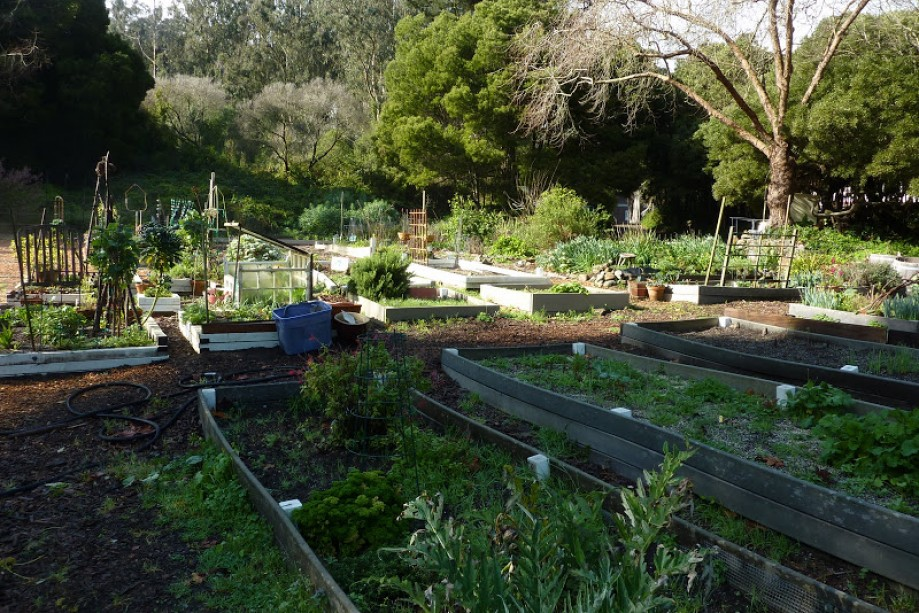 Trip photo #36/41 Fort Scott Community Garden