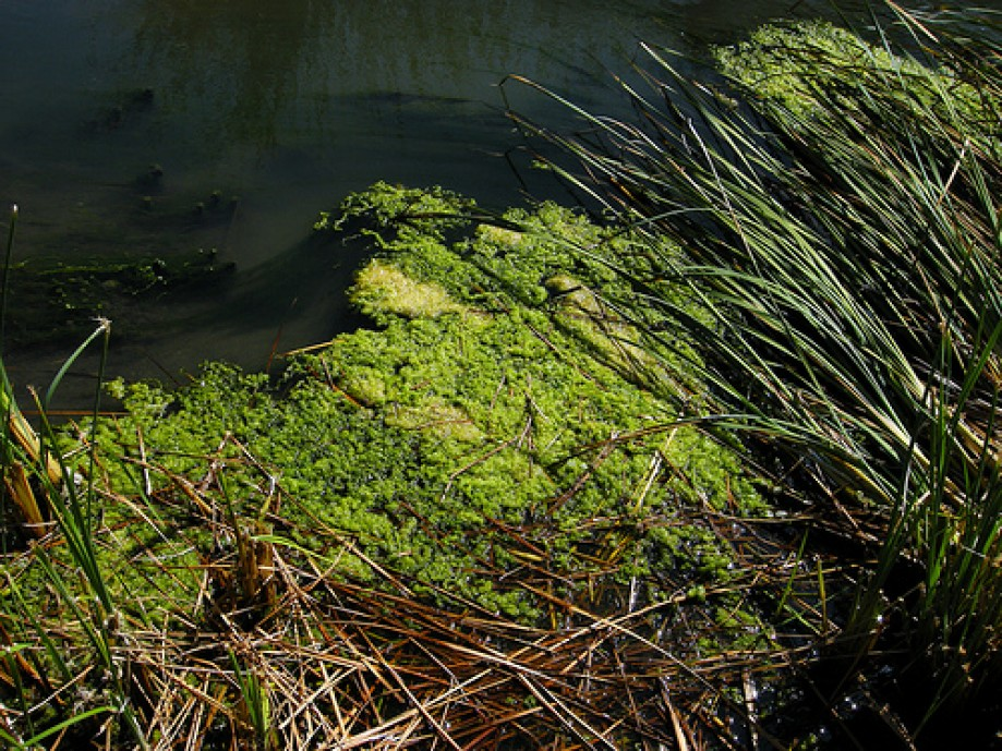 Trip photo #13/18 Algae in Storm Drain Pond