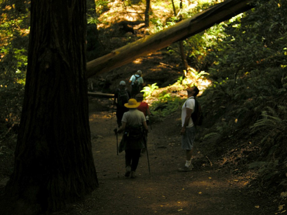 Trip photo #20/30 Admiring the Redwoods