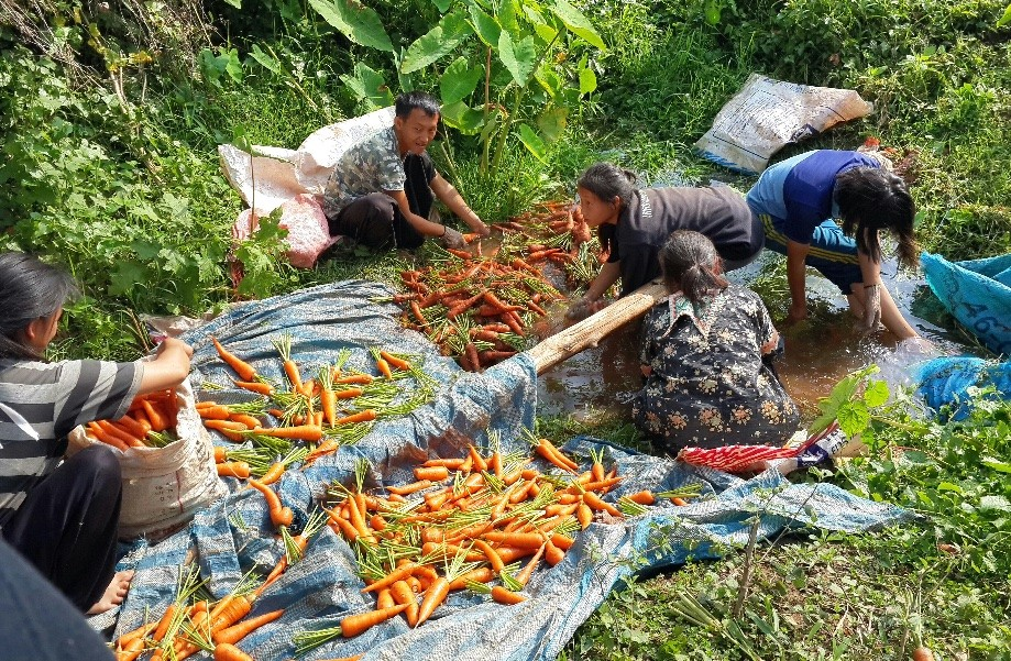 Trip photo #6/34 Locals cleaning freshly harvested carrots.  They were delicious.  We'd meet them on our way out as they were finishing.