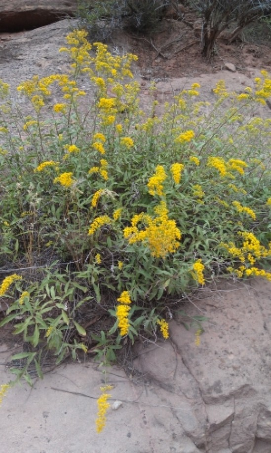 Trip photo #4/8 Yellow Wildflowers