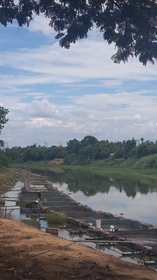 Trip photo #3/13 Fish farming in the Ping River
