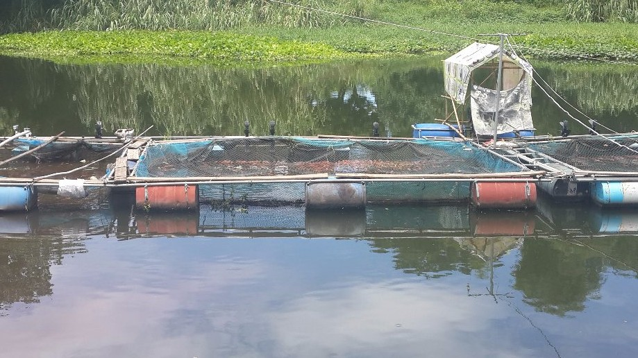 Trip photo #12/13 Fish farming in Ping River