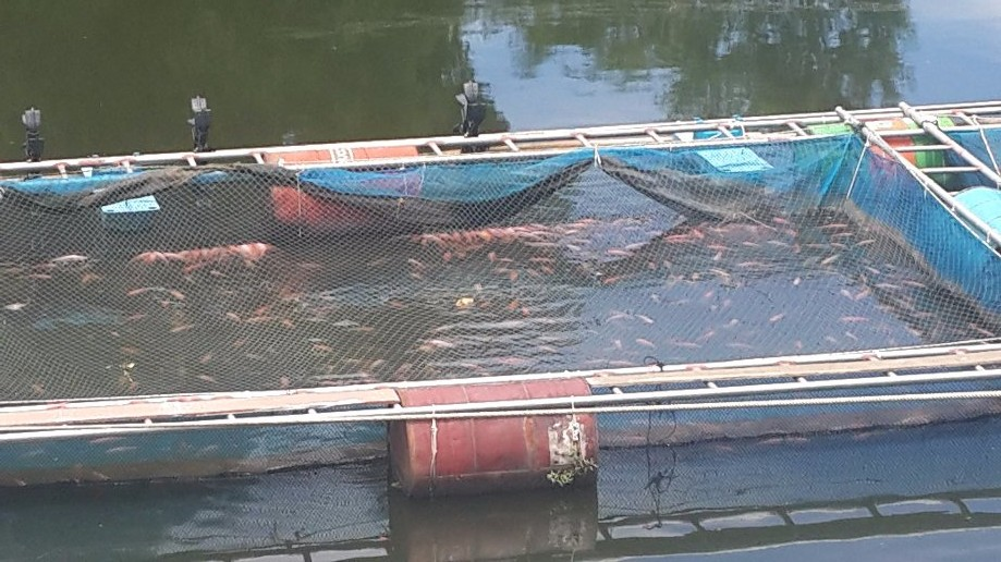 Trip photo #13/13 Fish farming in Ping River