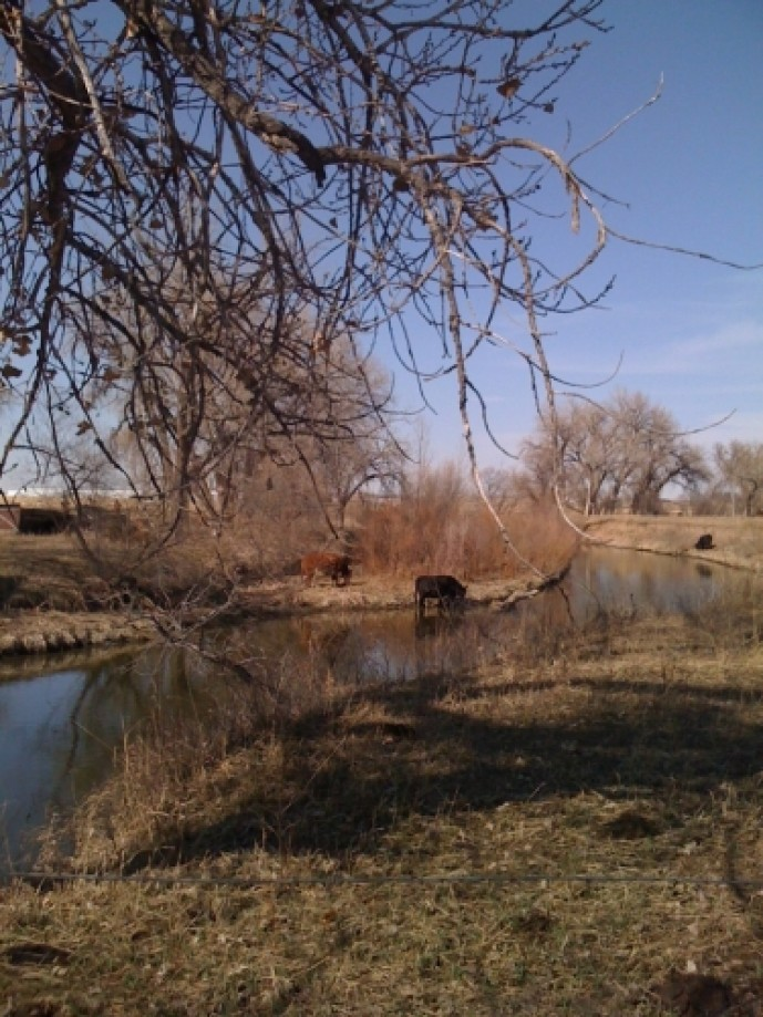 Trip photo #8/10 Cattle at the river