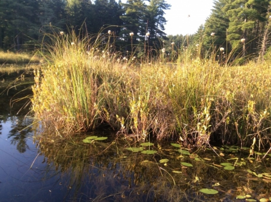 Trip photo #19/32 swamp grass
