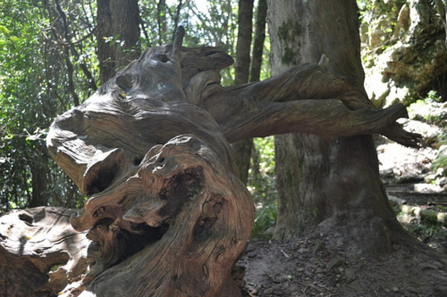 Trip photo #4/22 Tree contortions