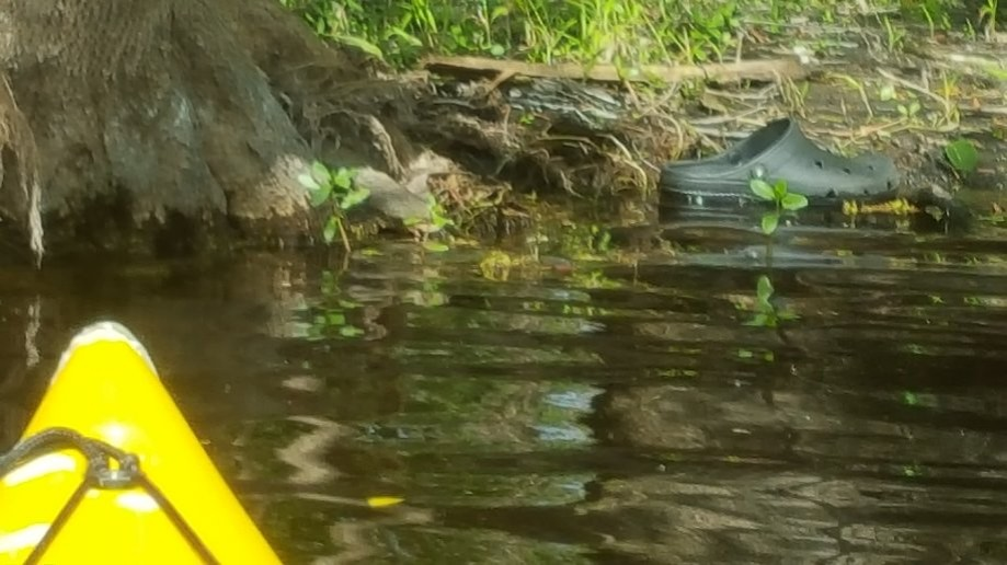 Trip photo #1/8 We came across a wild croc, did not knwo they came this far north in Forida