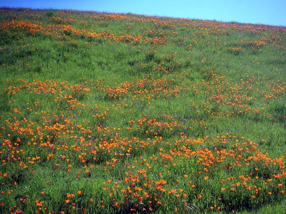 Trip photo #15/19 Poppy field by 1st summit