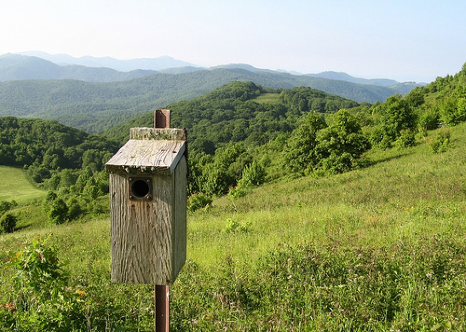 Trip photo #2/13 Birdhouse at Max Patch