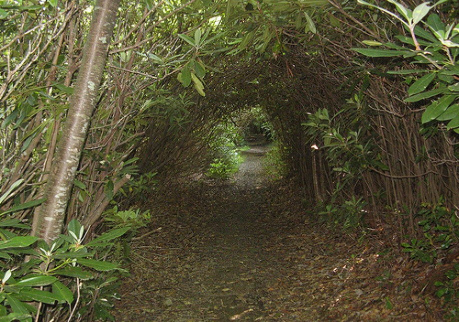 Trip photo #10/13 Rhododendron tunnel
