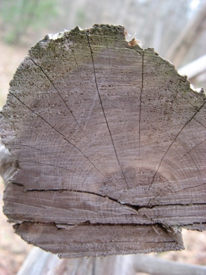 Trip photo #13/15 Tree rings in closeup