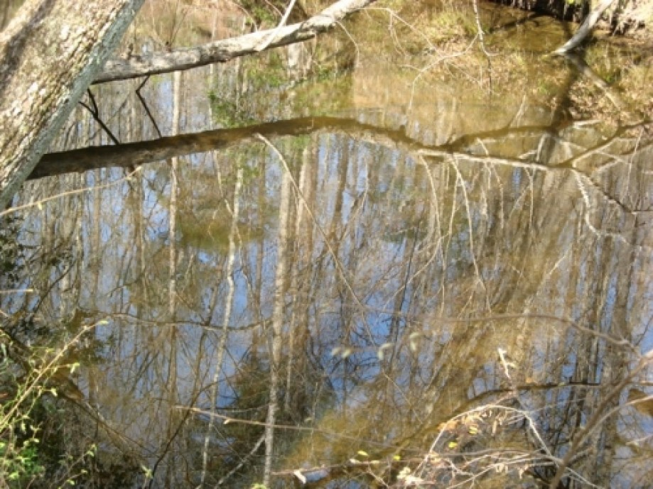Trip photo #17/20 Reflections in Campbell Creek
