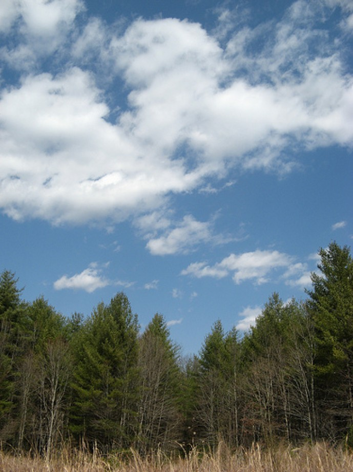 Trip photo #11/14 Sky over trees