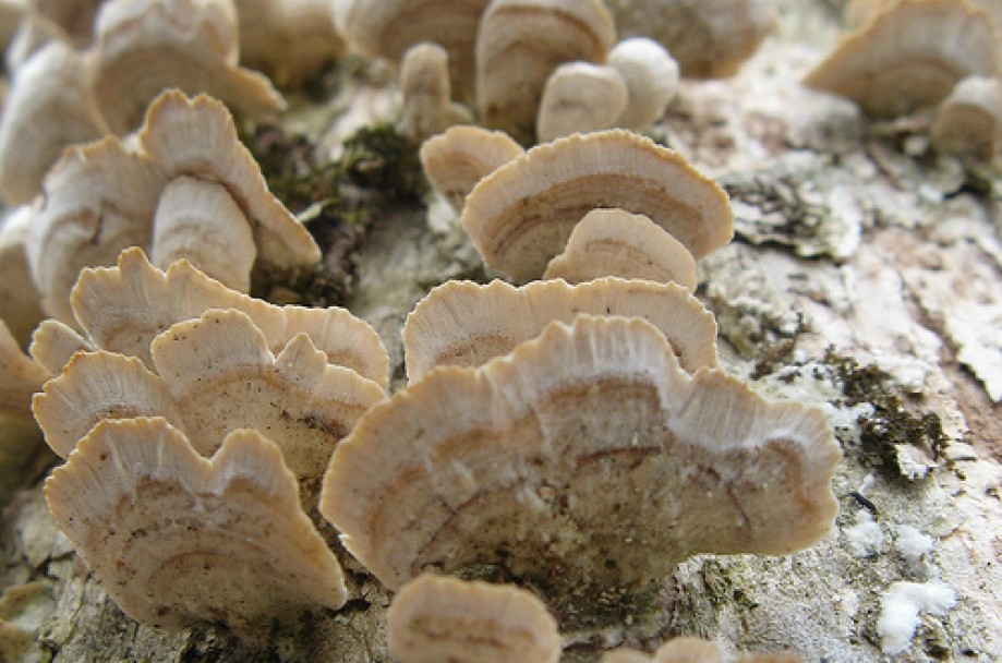 Trip photo #8/10 Fungi on tree, Section 3