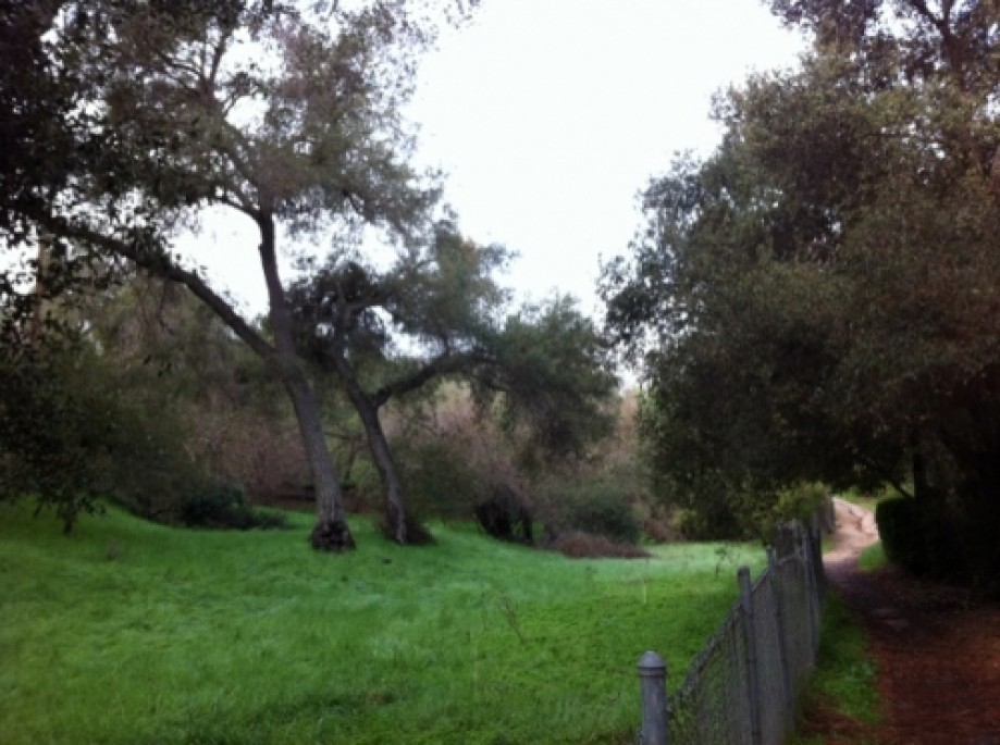 Trip photo #14/22 Beautiful private meadows on abutting properties in La Canada