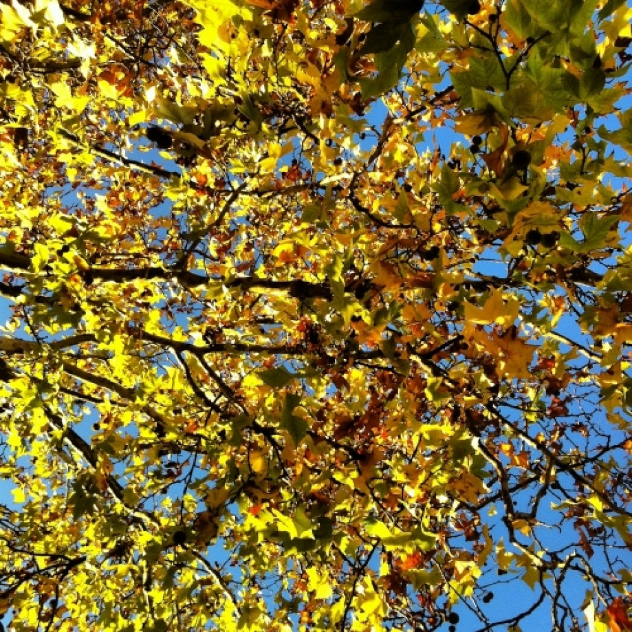 Trip photo #2/15 Golden leaves