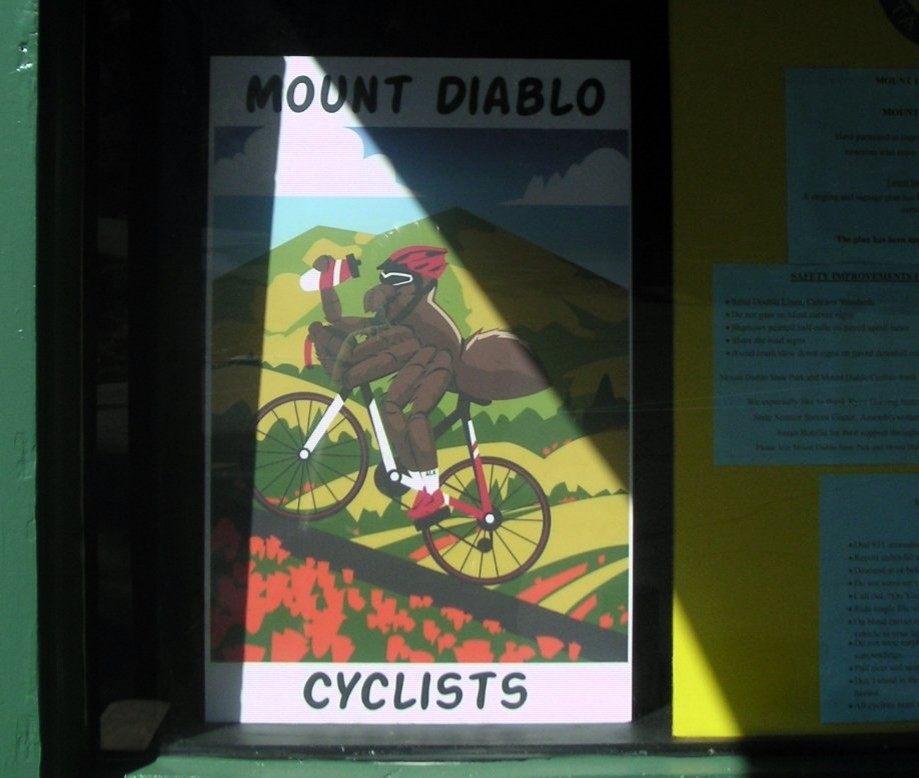 Trip photo #5/14 Tarantula cyclist poster