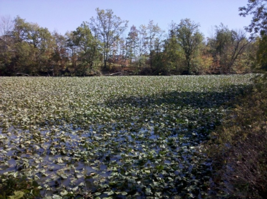 Trip photo #13/20 40 Acre Pond - 09