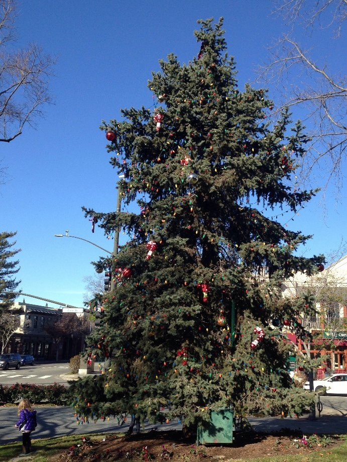 Trip photo #2/3 Decorated tree in downtown Livermore